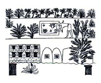 aloegypt dans PLANTES